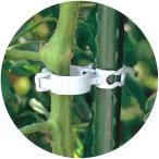 3600個 (300個×12袋) しちゅうキャッチ 20 緑 直径20mmイボ竹用 支柱 ワイヤー棚誘引用 シーム タ種 代引不可