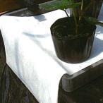 北海道配送不可 透湿遮根シート RG-W 120cm×100m 白 アクアベール 遮根シートのみ 防根シート 育苗 いちご ベル開発 カ施 代引不可
