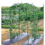 つる野菜の空中栽培が楽しめます!