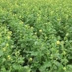 【種 3kg】 チャガラシ 辛神 からじん 緑肥 薫蒸作物 生種子 雪印種苗 米S【代引不可】
