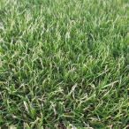 種 10kg ペレニアルライグラス リン 芝 緑化用 [播種期:3〜10月] 雪印種苗 米S 代引不可
