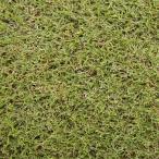 【種 2kg】 バミューダグラス サンデビル2 芝生用 矮性品種 緑肥 [播種期:4〜7月] 雪印種苗 米S【代引不可】