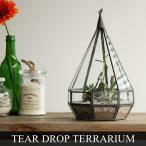 """ティアドロップ テラリウム Sサイズ Tear Drop Terrarium """"S"""""""