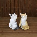 ベニーズキャット ハイタッチ 2種 サバ白 茶トラ白 ミケ ねこ ネコ