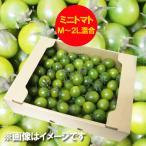 訳あり トマト 送料無料 ミニトマト 北海道 ミニ トマト M〜2Lサイズ 2kg(2キロ) 価格 2980円 トマト/とまと 無撰別 品種 みどりちゃん