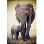 ポスター/象の親子 Elephant and Baby フレームなし