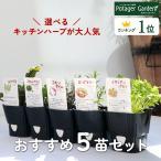 ハーブ 苗 セット 2個(おまかせ 種類 栽培 ハーブティー ハーブガーデン 花 ガーデニング 苗木 栽培キット 送料無料)