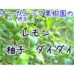 訳あり特価 レモン 伊豆在来種 無農薬 無肥料 除草剤不使用 5個=1000円送料込み
