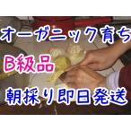 ジャム用甘夏 2kg=600円 無農薬 有機�