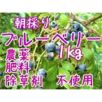 ブルーベリー 生1kg 肥料 除草剤 農薬 不使用 簡易包装
