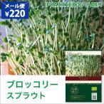 ブロッコリースプラウト 栽培 種 種子 タネ オーガニック 有機種子 水耕栽培 かいわれ型 家庭菜園