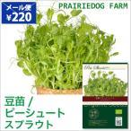 豆苗 ピーシュート スプラウト の種 オーガニック 有機種子 水耕栽培 かいわれ型 家庭菜園