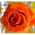 プリザーブドフラワー染色液〈リゾートオレンジ〉1000ml