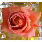プリザーブドフラワー染色液〈サクラ桜〉250ml