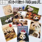 ポストカード10枚セット「PANDA panda LIFE...」 (パンダ,パンダフォト,大西亜由美さんデザイン,手紙,レター,可愛い,文房具)
