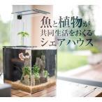 アクアリウム 水槽 シェアキューブ フルセット 魚 植物 水耕