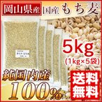 もち麦 国産 5kg 画像