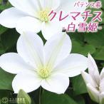 クレマチス 『白雪姫』 パテンス系(早咲き大輪系) 9cmポット苗
