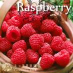ラズベリーは直立性のキイチゴで、切り花にも使われています。非常に生育旺盛で育てやすく、やせ地でもすく...