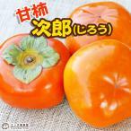 柿(甘) 『次郎(じろう)』 15cmポット苗