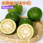 木頭柚子(本ゆず) 接ぎ木15cmポット苗
