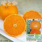 柑橘 『せとか』 13.5cmポット接木苗【2年生】