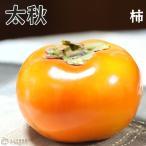ショッピング苗 柿(甘)『太秋(タイシュウ)』 12cmポット苗