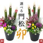 選べる門松『 お正月寄せ植え 』 正月飾り 玄関 門松 アレンジ 寄せ植え 7号鉢植え 高さ約70cm ( 送料無料 )