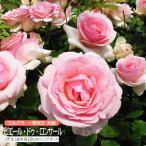 ツルバラ 大輪 『ピエール・ドゥ・ロンサール』送料無料 2年生接ぎ木苗 (クライミングローズ) 世界殿堂入り薔薇