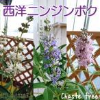 西洋ニンジンボク(チェストツリー) 4号鉢植え 【選べる花色】