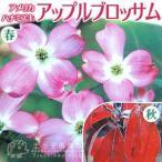 花付の良いピンクの大輪