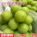 送料無料 山梨県産 シャインマスカット 秀品 8〜10房入り 5kg