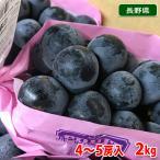 送料無料 長野県産 ナガノパープル 2kg(4〜5房)