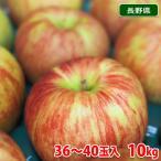 長野県産 サンつがる(早生)秀品  32玉〜40玉入り 10kg箱