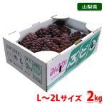 送料無料 山梨県産 ぶどう デラウェア 秀品・12〜16房入り/2kg箱