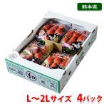 熊本県産いちご さがほのか M〜Lサイズ 4パック