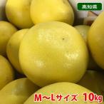 【送料無料】高知県産 土佐文旦 3L〜4Lサイズ 10kg