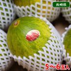 【送料無料】長崎県産 パパイヤメロン 5〜7玉入り(1箱)