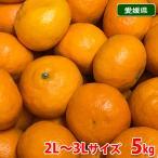 愛媛県産 カラマンダリン 秀品・L〜3Lサイズ 5kg