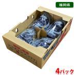 【送料無料】福岡県産 種なし巨峰 4パック入り(1箱)