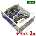 送料無料 香川県産 ニューピオーネ 秀品 2kg 4房入り(1箱)