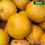【送料無料】愛媛県産 甘夏みかん Lサイズ 10kg