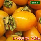送料無料 愛知県産 筆柿(ふでがき)秀品 L〜3Lサイズ 7.5kg箱