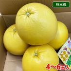 熊本県産 ハウス晩白柚(ばんぺいゆ) 10kg