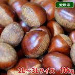 送料無料 愛媛県産 ブランド栗(くり)2L〜3Lサイズ 10kg