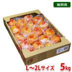 福岡県産 冷蔵柿 富有柿 L〜2Lサイズ 5kg