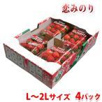長崎県産 いちご 恋みのり L〜2Lサイズ 4パック入り(箱)