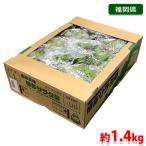 【送料無料】福岡県産 サラダ菜 約1.4kg(12パック入り)箱