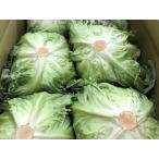 茨城県産 レタス 秀品・Lサイズ 19玉前後入り(約8kg)