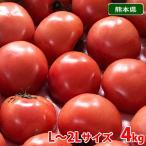 熊本県産 トマト 等級A・L〜2Lサイズ(16〜20玉入) 約4kg
